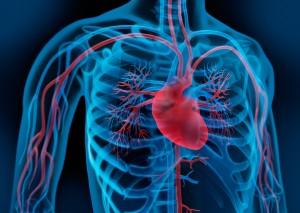 Beschwerden des Herz-Kreislaufsystems mit TCM Behandlung behandeln
